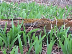 05.15.14 Namebini Spring 072